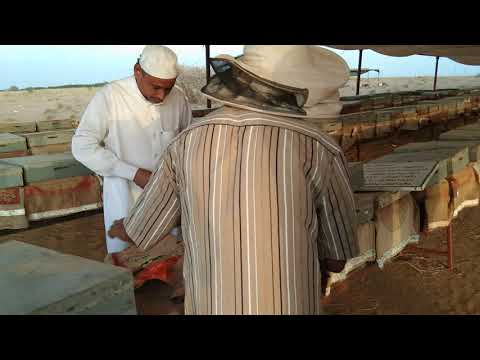 Bee farm of one of the best honey in Saudi Arabia, Jizan
