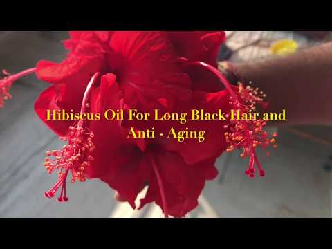 Prevent Hair Fall, Hair Loss and Anti - Aging with Homemade Organic *Hibiscus Hair Oil*  | DIY