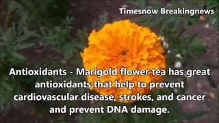 Health Benefits of Marigold Flower | health tips, health care, In English - TimesNow BreakingNews