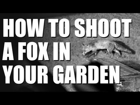 How To Shoot A Fox In Your Garden