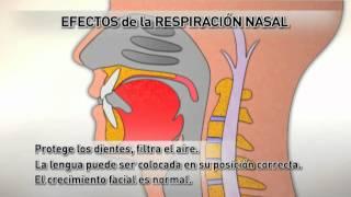 Efectos de la Respiración Bucal