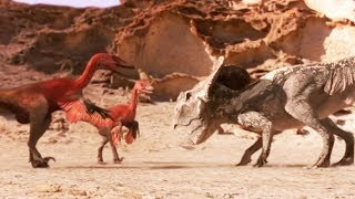 Protoceratops VS velociraptors (dinosaures) - ZAPPING SAUVAGE