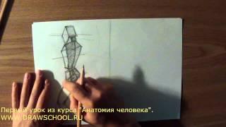 Урок по анатомии человека №1
