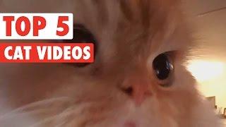 Cute Kitten Pet Compilation 2016