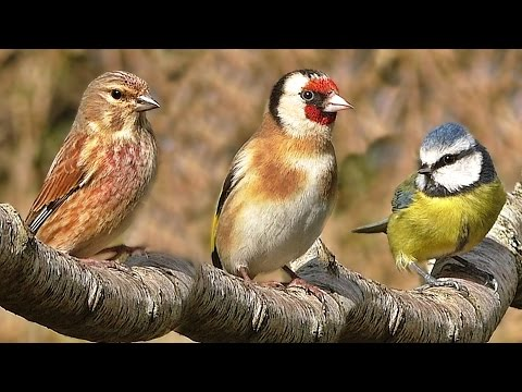 Bird Song in April : Tranquil Bird Sounds and BeautIful Video