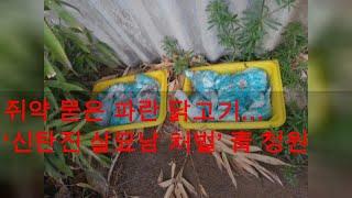 쥐약 묻은 파란 닭고기… '신탄진 살묘남 처벌' 靑 청…