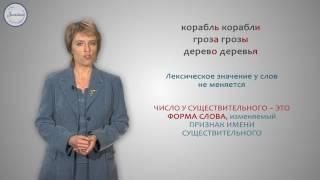 Русский 3 Число имён существительных