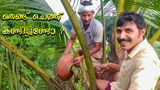 Toddy tapping method in kerala  ( coconut tree)  തെങ്ങ് ചെത്ത് കണ്ടിട്ടുണ്ടോ ?