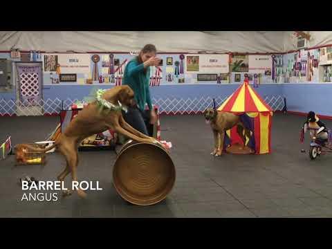 Ridgeback Circus