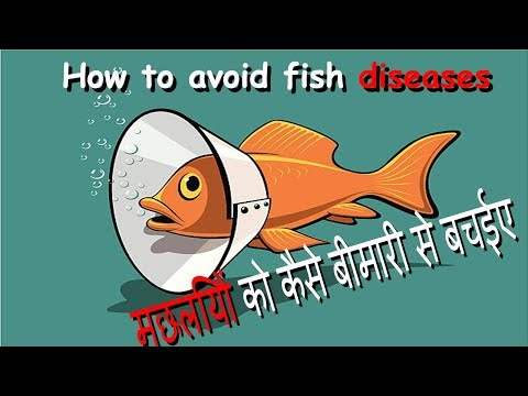 How To Aviod Fish Disease In Hindi    Keep Your Fishes Healthy
