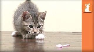 Hilarious Kitten Plays With Tea Set, Makes a MESS! - Kitten Love