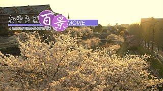 第67回「夕桜」