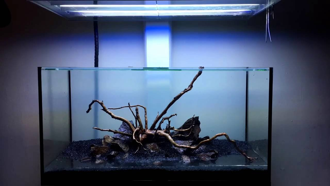 Spiderwood Aquascape Build Time Lapse - 91cm - YouTube