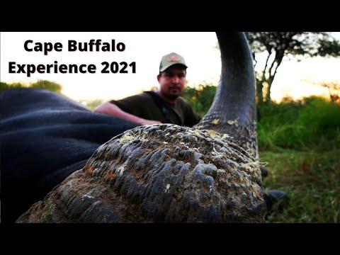 4K Cape Buffalo Hunting Experience 2021
