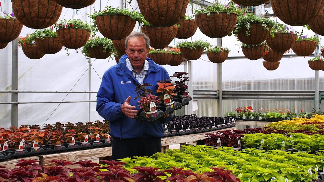 Coleus Plants YouTube