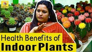 வீட்டுக்குள் வளர்க்க வேண்டிய செடிகள்   Health Benefits of Indoor Plants in Tamil
