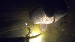 Ночная подводная охота Карась рукой 02 02 2020