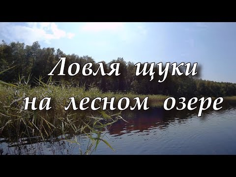 Карась - ловля карася видео