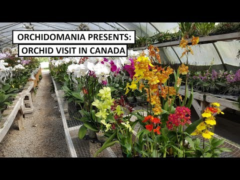 Orchidomania Presents: Canadian Orchid Visit