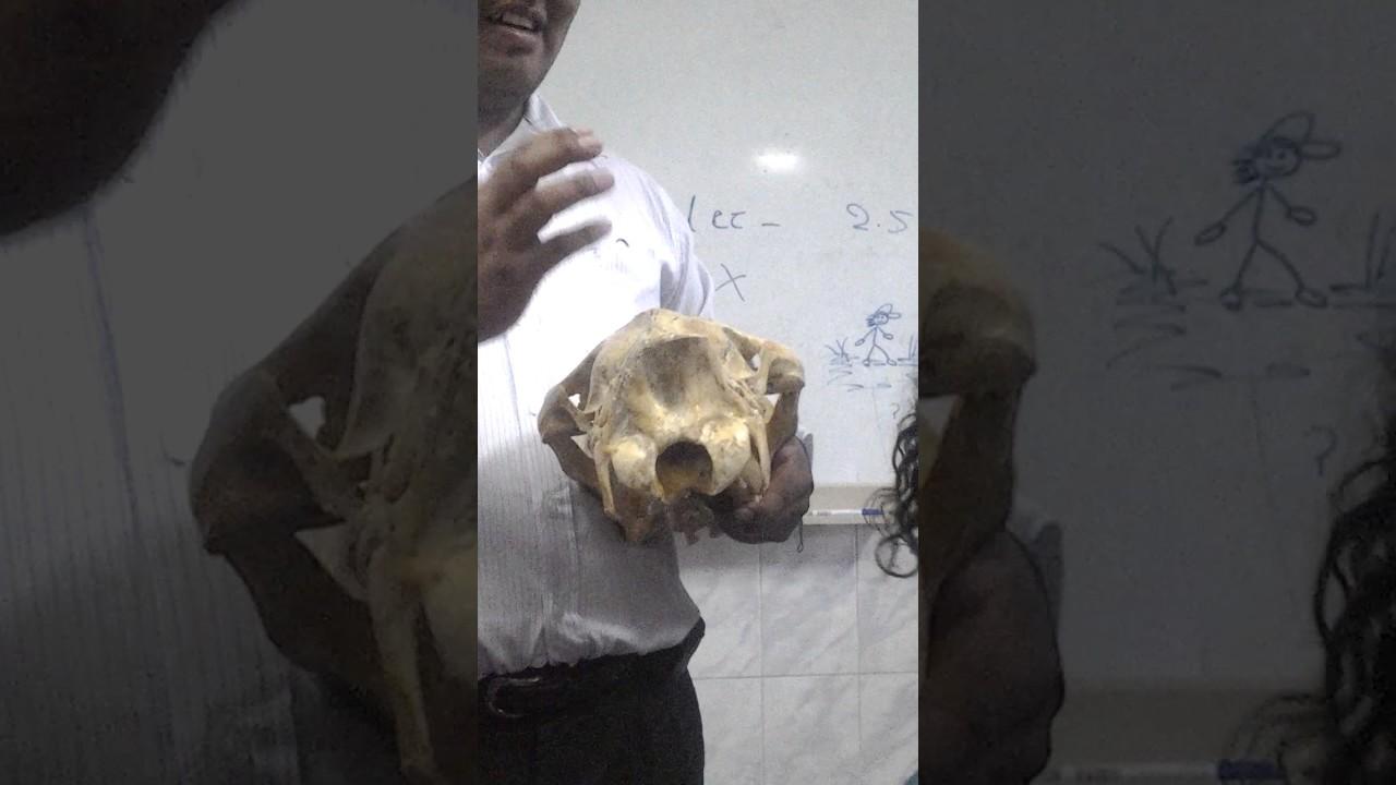 Anatomia 1 EXAMEN PRACTICO 1 - YouTube