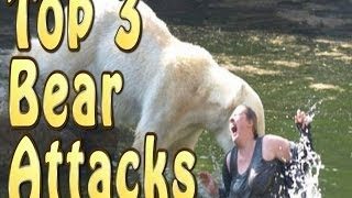 Top 3 Best Bear Attacks (warning)