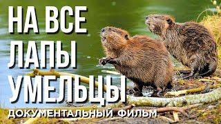 НА ВСЕ ЛАПЫ УМЕЛЬЦЫ   Документальный фильм   Уникальные съемки