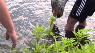 Фартовая рыбалка пруд Кострома Белгородс...