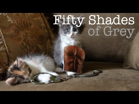 50 Shades of Grey Trailer - Cute Kitten Edition