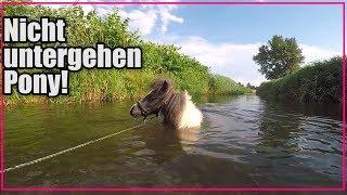 Nicht untergehen Pony!