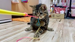 猫と綱引きで力くらべをしてみた結果w