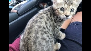 Bringing our bengal kitten home | VLOG 1