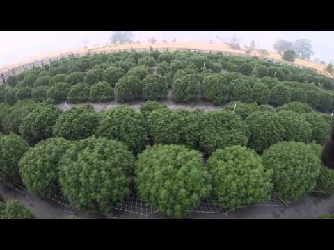 Commercial Cannabis Grow - August 26 2015 (Drone Footage Two)