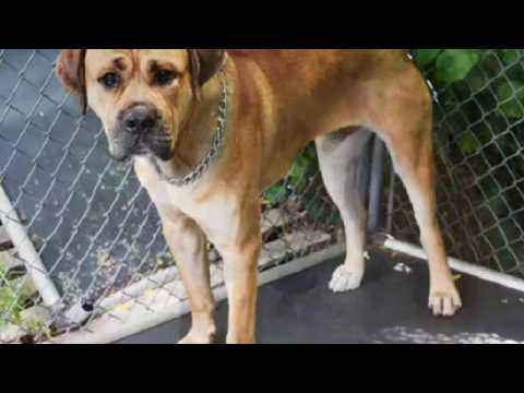 Staten Island Shelter Dogs 2016