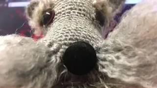Amigurumi örgü köpek yapımı