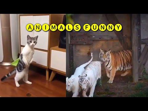 Funny animals ; hewan aneh persi onder sepot
