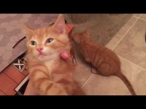 Foster Kittens 8 Week Update! Nutmeg, Cinnamon and Gingersnap!