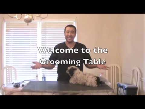 The Grooming Table: Cleaning & Trimming Ears