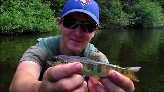 Fly Fishing For Baby Salmon