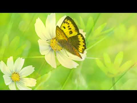 Relaxing music: Relaxing Peaceful music, Meditation Music
