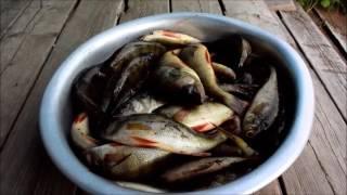 Рыбалка в Карелии и не только(Это чудесное видео о вполне продуктивной окунёвой рыбалке на карельских ламбушках. Мои героические хожден..., 2016-08-07T18:30:55.000Z)