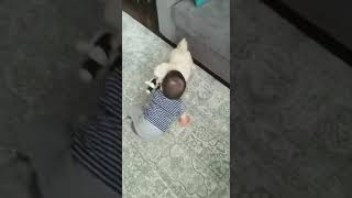 Baby and Puppy fight over a teddy Panda