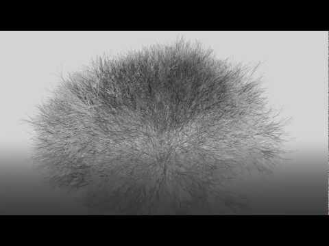 Infinite Trees - Generative 3D System (OpenGL)