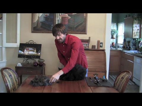 De-matting and De-shedding a cat