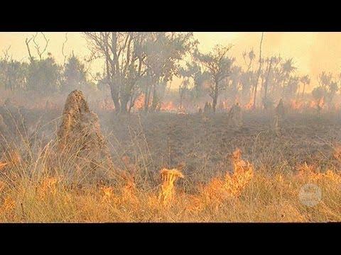 Aboriginal wetland burning in Kakadu (2005)