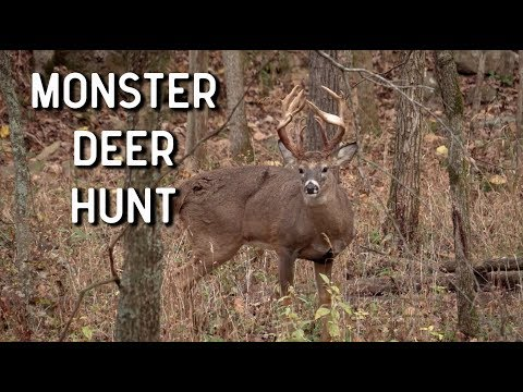 Monster Deer Hunt | Oak Creek Whitetails