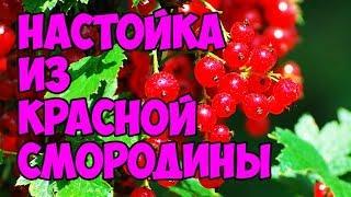 видео Красная смородина – рецепты настойки на водке