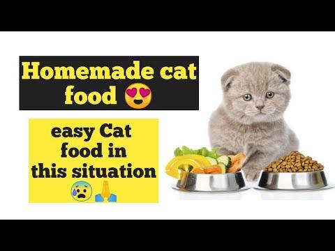 persian cat food recipe