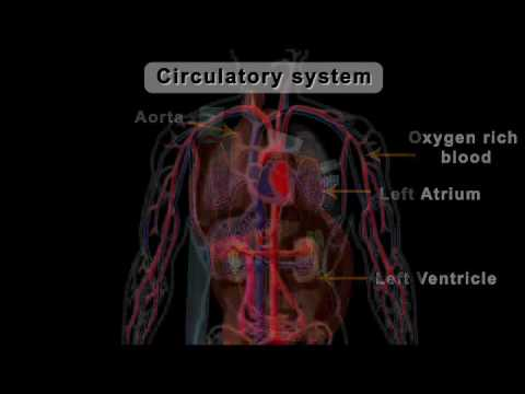 Edge Circulatory System Class 8910 Youtube