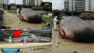 Was zum Teufel geht hier vor sich ? Wer oder was teleportiert hier tonnenschwere Wale ?