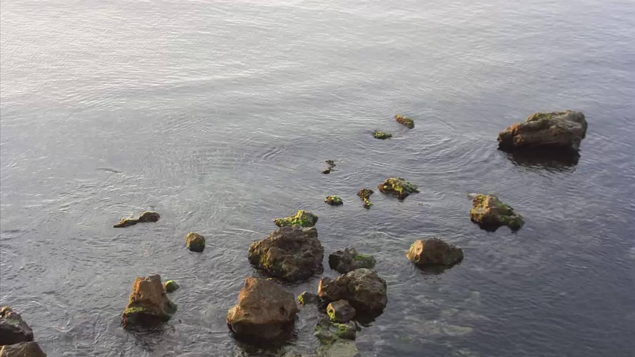 Амия морети видео фото 248-949